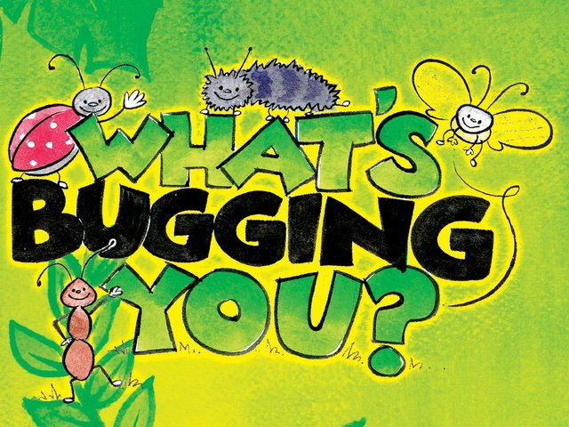 What's Bugging You? Preschool Series