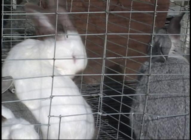 Elaboración de pellets para conejos en forma artesanal aprovechando residuos hortícolas.