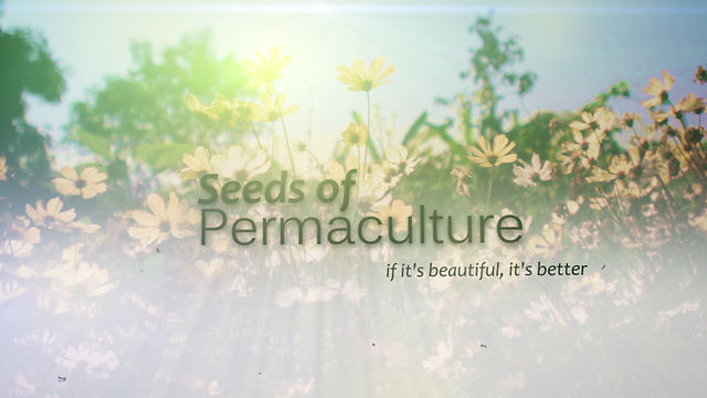Seeds of Permaculture, a Tropical Documentary