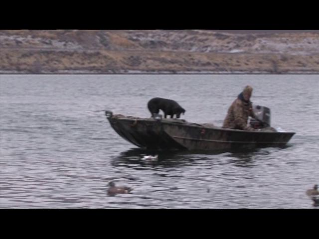 Episode 8 Duck Dog Waterfowl