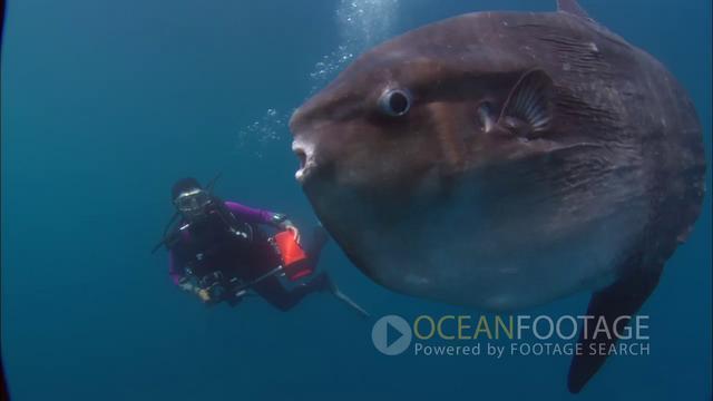 Ocean footage big fish on vimeo for Big fish in the ocean