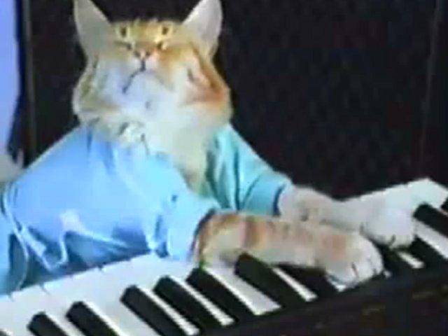 keyboard cat meets talking heads on vimeo