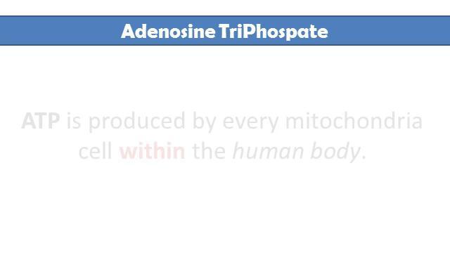 Adenosine Triphosphate (ATP) - Reviews, Facts & Warnings