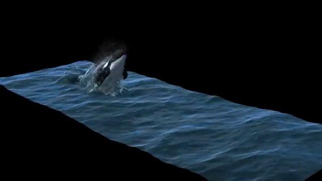 NAIAD with TEXTURED ORCA