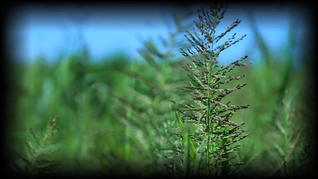 Weeds that Feed-  The Management Advantage #4