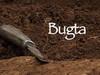 Bugta