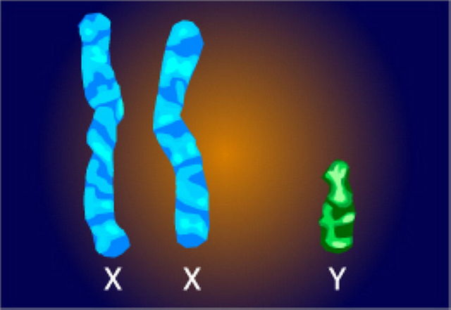 The Y Chromosom... Y Chromosome