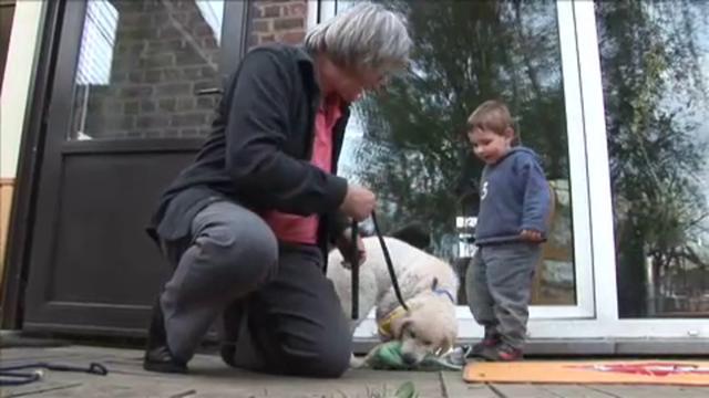 dyadis chiens d 39 aide pour personnes handicap es physiques on vimeo. Black Bedroom Furniture Sets. Home Design Ideas