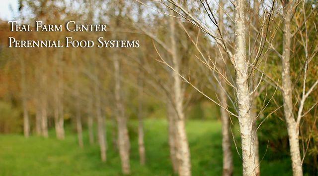 Teal Farm Center: Perennial Food Systems 2012
