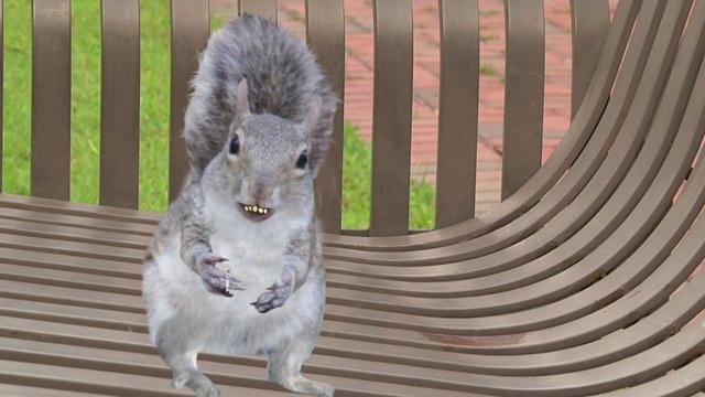 Squirrel Wellness - Smoking