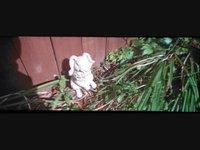 Flowers Video (01:02)