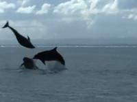 Ecoventures Dolphin Promo