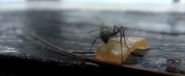 """Ant"" -Casio Exilim ZR-200 Slow Motion-"