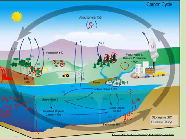 cycles in ecosystem Iv biogeochemical cycles : the fundamental difference between the flow of  energy and the flow of materials in an ecosystem is that the latter can flow  through.