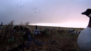 """THE GRIND WATERFOWL TV """"Canada"""""""