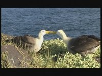 [Velisti per Caso] L'aeroporto degli albatros