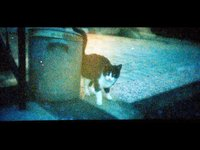 ONE SUNNY WINTER DAY - LomoKino movie (00:24)