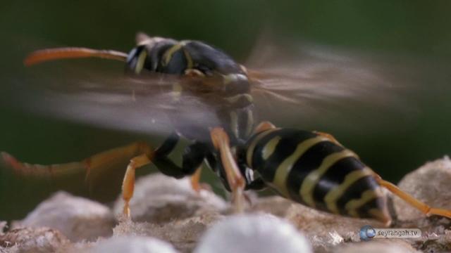 Bal Arılarının Dereceleri Mi Var?