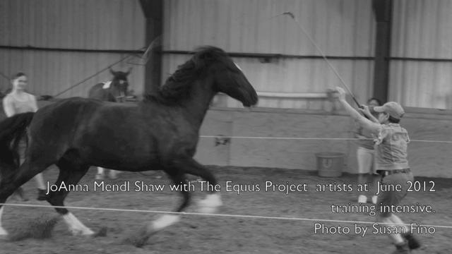 Equus Training