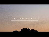 A bird ballet | Music Video