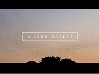 A bird ballet | Music Video