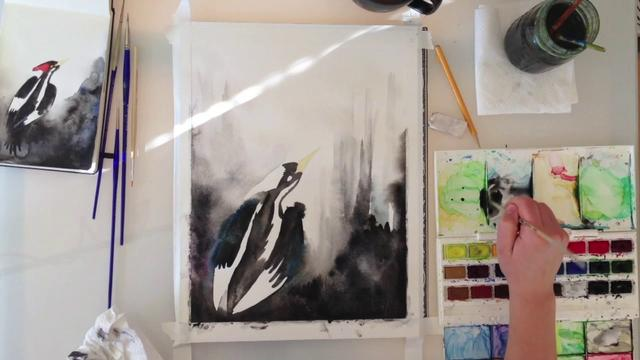 Ivory-Billed Woodpecker time lapse watercolor painting