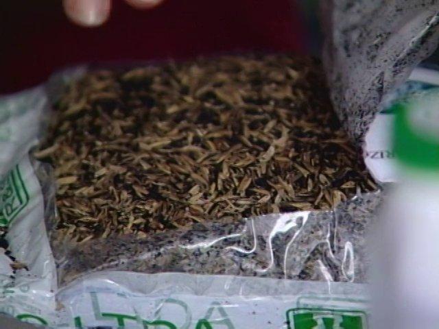 El humus producido por las lombrices es un fertilizante natural con excelentes características. En este caso se muestra un concentrado líquido del mismo.