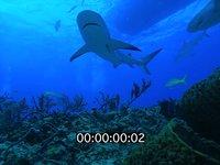 2012 11 BAHAMAS 0053