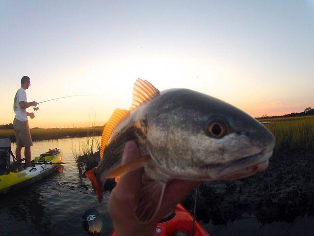 Kayaking for Redfish – Surf City, NC