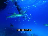 2012 11 BAHAMAS 0160
