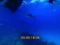2012 11 BAHAMAS 0159