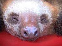 En hink med socker sengångare
