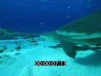 2012 11 BAHAMAS 0665