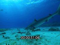 2012 11 BAHAMAS 0703