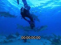 2012 11 BAHAMAS 0774