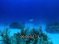 2012 11 BAHAMAS 5136