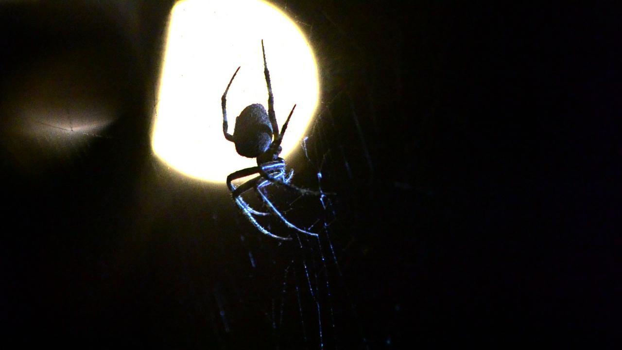 Arachnids on vimeo