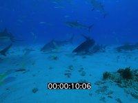 2012 11 BAHAMAS 0766
