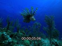 2012 11 BAHAMAS 5165