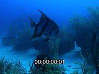 2012 11 BAHAMAS 5169
