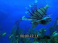 2012 11 BAHAMAS 5163