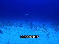 2012 11 BAHAMAS 9644