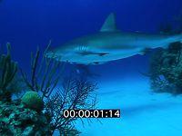 2012 11 BAHAMAS 5217