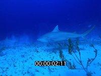 2012 11 BAHAMAS 9652