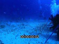 2012 11 BAHAMAS 9648