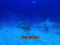 2012 11 BAHAMAS 9654