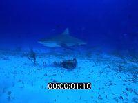 2012 11 BAHAMAS 9653