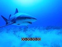 2012 11 BAHAMAS 9658