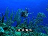 2012 11 BAHAMAS 5161