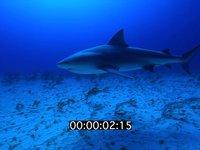 2012 11 BAHAMAS 9694